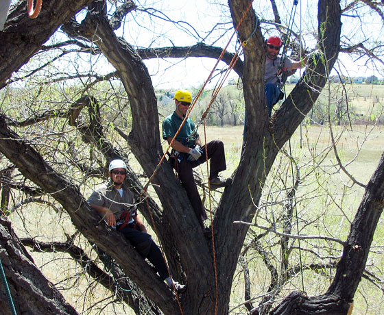 Working in a tree