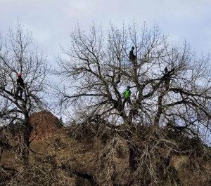 Berkelhammer Tree Experts