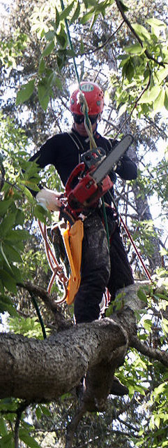 Friend Luke Glines, 3-time Rocky Mountain Tree Climbing Champion