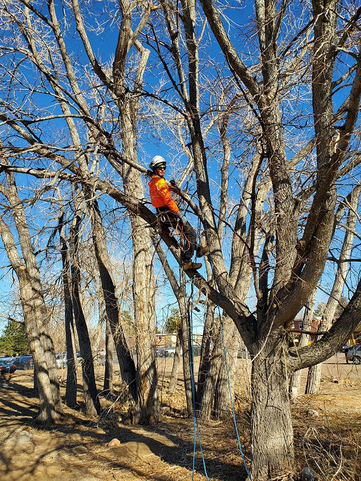 Matt Arnold up in the trees