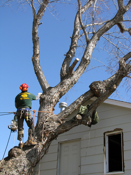 Crane Removal of Tree Leaning on Barn (1 of 8)